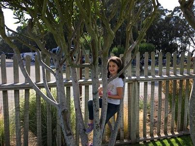 Avery in tree