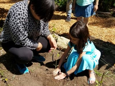 Avery planting sunflower